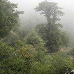 طبیعت گردی چهار فصل در زیبایی های جنگل ابر شاهرود