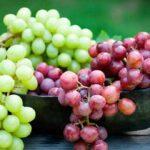 انگور گیاهی تماما دارویی