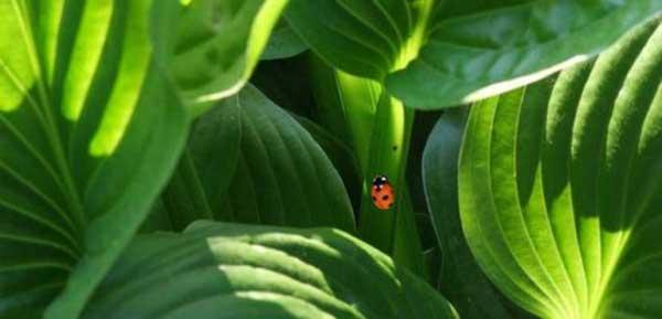 اگر در جستوجوی گیاهان دارویی هستید