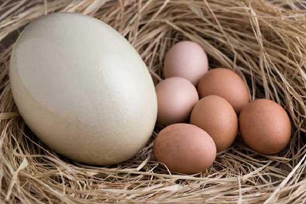 خواص تخم شتر مرغ