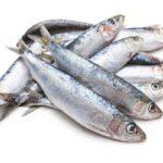خواص ماهی ساردین