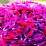 ۷ خاصیت مهم «گل گاوزبان»
