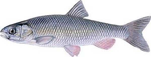 خواص شگفت انگیز ماهی / بهترین ماهی کدام است!