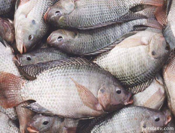 فواید پوست ماهی