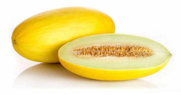 آشنایی با خواص خربزه میوه ی شیرین تابستانی