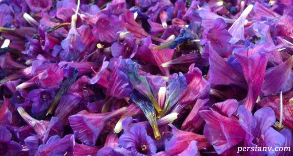 خواص گل گاو زبان و آشنایی با خواص داروئی آن