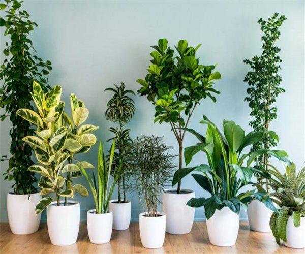 گیاهی برای ضدعفونی