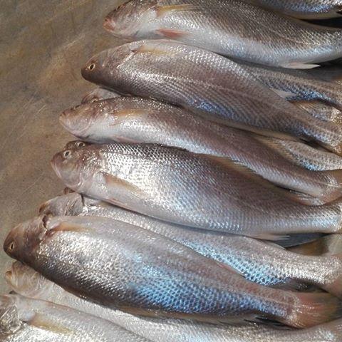 خواص ماهی های جنوب