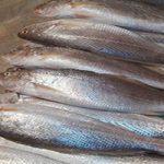 خواص ماهی های جنوب را می دانید؟