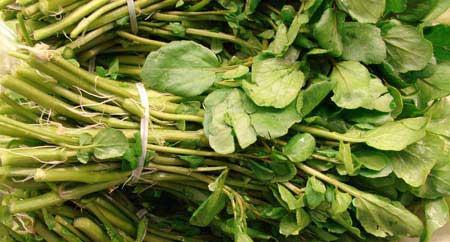 با خواص گیاه دارویی کلشک یا علف چشمه آشنا شوید +عکس