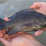 خواص پوست ماهی برای درمان بیماران سوختگی