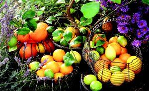 میوههای ضد فراموشی و آلزایمر را بشناسید