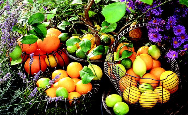 میوههای ضد فراموشی