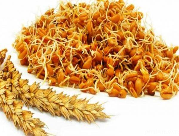 مصرف جوانه گندم با شیر