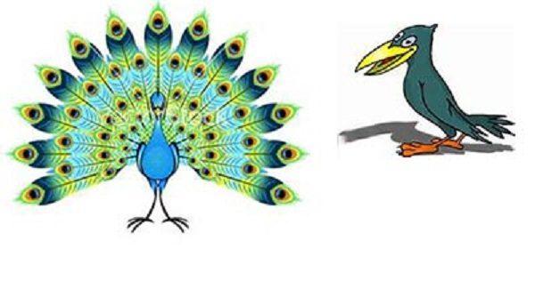 داستان کوتاه طاووس و کلاغ