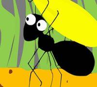 شعر و قصه کودکانه درباره مورچه