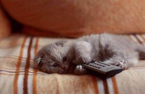 عکس: ای بابا تلویزیون هم که هیچی نداره !