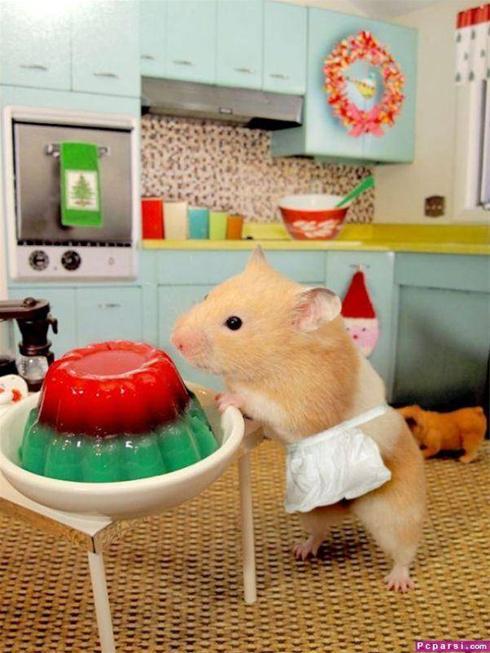 عکس: موش رو که تو خونه تنها بزاری اینطور میشه.. !