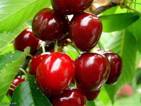 عکسهای دیدنی و زیبا از میوه ها