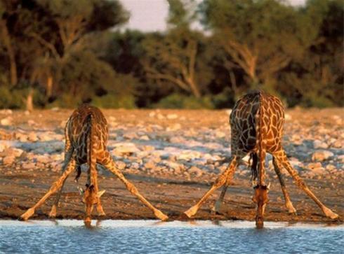 عکس: اینو میگن ریلکس آب خوردن