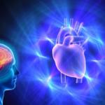 گفتگوی قلب و مغز!