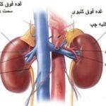 ارگانهای داخلی و حیاتی بدن کدام است
