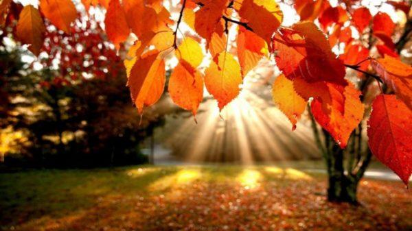 مزاج فصل پاییز