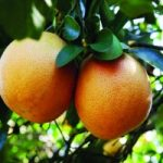 میوههای پاییزی که لاغرتان میکند