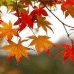علائم بیماری های پاییزی و روش های درمان آن ها