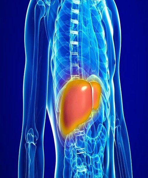علل ابتلا به کبد چرب و روش های درمان