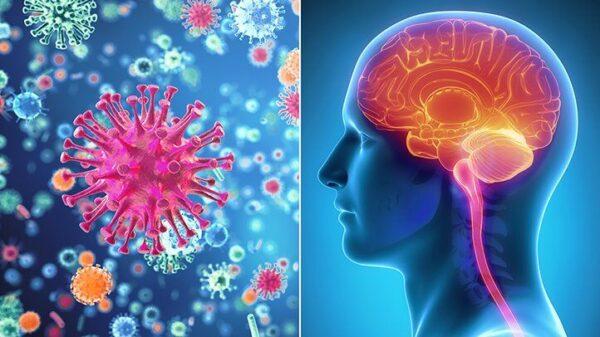 علل به وجود آمدن مننژیت ؛ علائم، پیشگیری و درمان آن