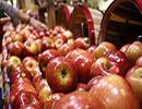 جنجال تازه «سیب» و «سرطان» در ایران  / سیب را با پوست نخورید
