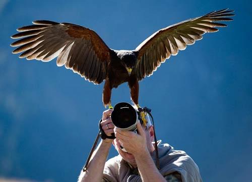 عکس: لحظهای که عکاس شکار میشود