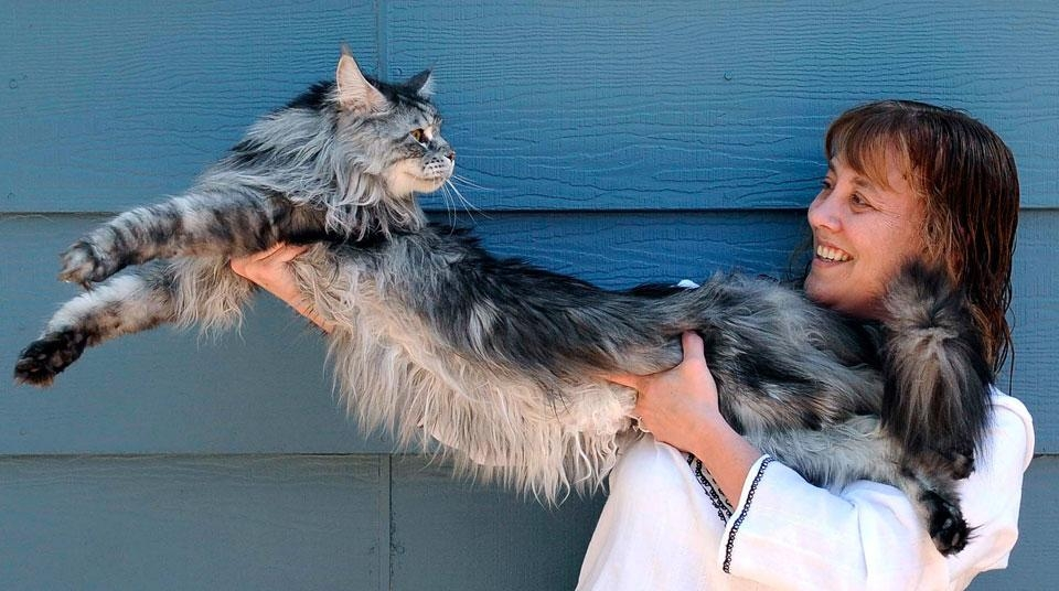 بلندترین گربه جهان + عکس