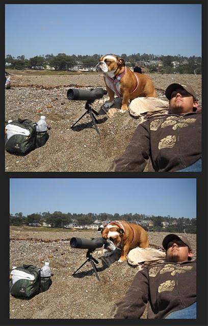 عکس های جالب و بامزه