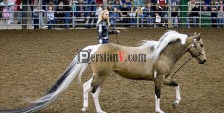 عکسی باور نکردنی از یک اسب زیبا