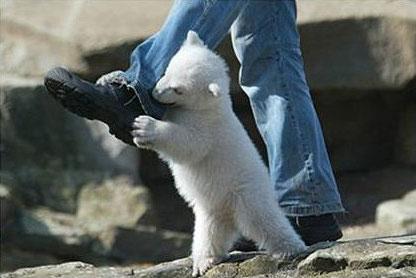تصاویر بازی یک خرس قطبی با انسان