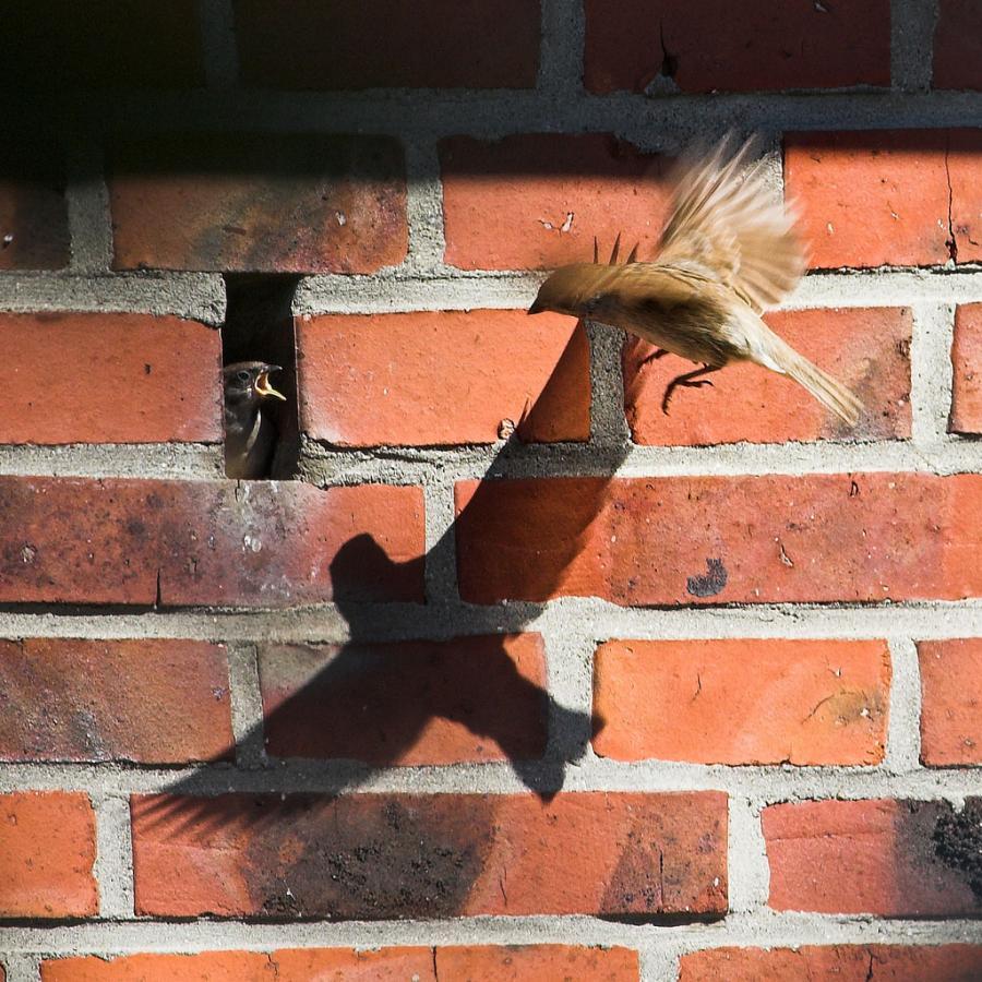 عکس لحظه شکار: سایه صیاد بر دیوار