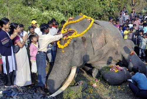 عکس : تصادف یک فیل با قطار !