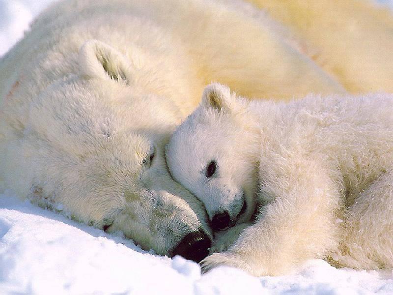 تصویری زیبا : آغوش گرم مادر
