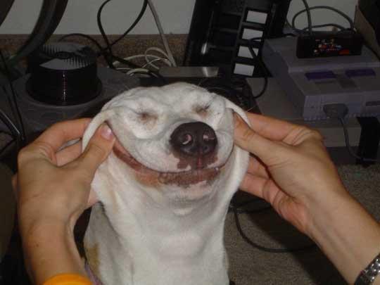 عکس:چگونه سگ خود را خوشحال کنیم؟!