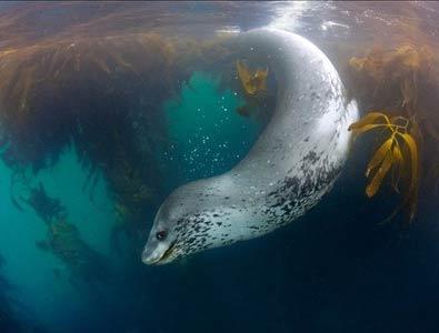عکس های دیدنی از شگفتیهای اعماق اقیانوسها