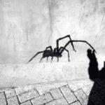 آشنایی با «PHOBIA» یا ترس غیر منطقی (وحشت!)