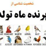 شخصیتشناسی با پرنده ماه تولد شما