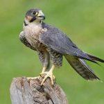 شخصیت شناسی جالب با پرندگان ماه تولد!