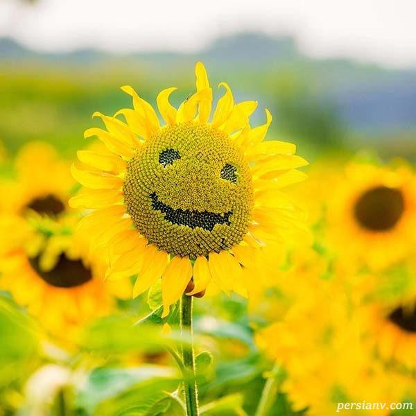 راه های ساده برای جذب انرژی مثبت
