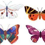 شخصیت شناسی از روی پروانه با انتخاب تصویر