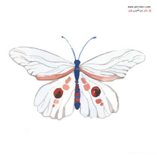 شخصیت شناسی از روی پروانه
