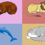 تست تشخیص کرونوتایپ و الگوی خواب خرس شیر دلفین و گرگ
