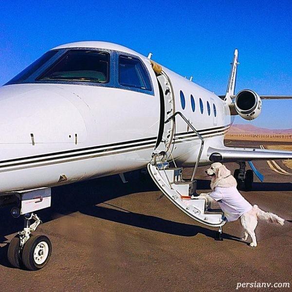 سگ الکسیس سانچز در حال سوار شدن به هواپیمای شخصی